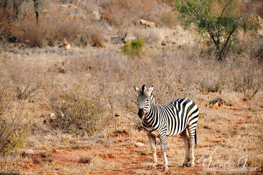 Africa-Madikwe-small-107