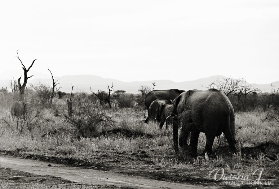 Africa-Madikwe-small-111