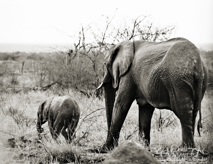 Africa-Madikwe-small-116