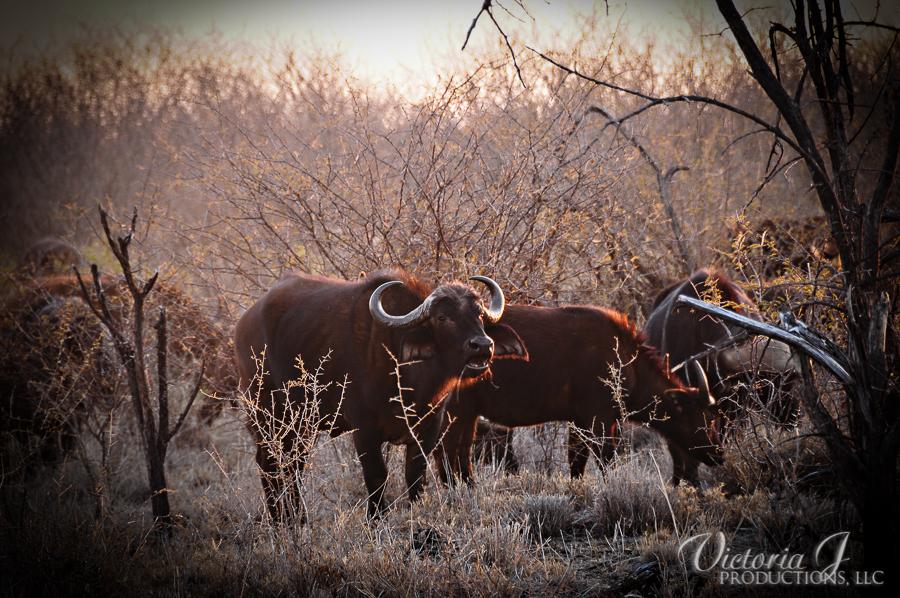Africa-Madikwe-small-123