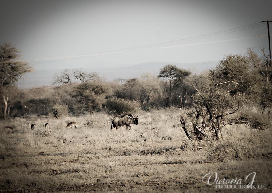 Africa-Madikwe-small-127
