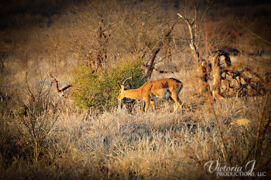 Africa-Madikwe-small-128