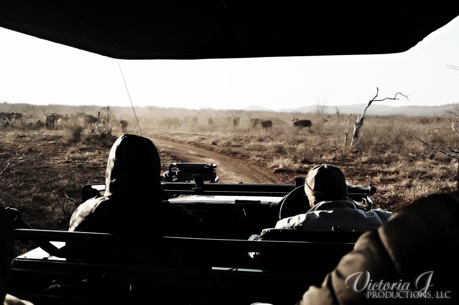 Africa-Madikwe-small-129