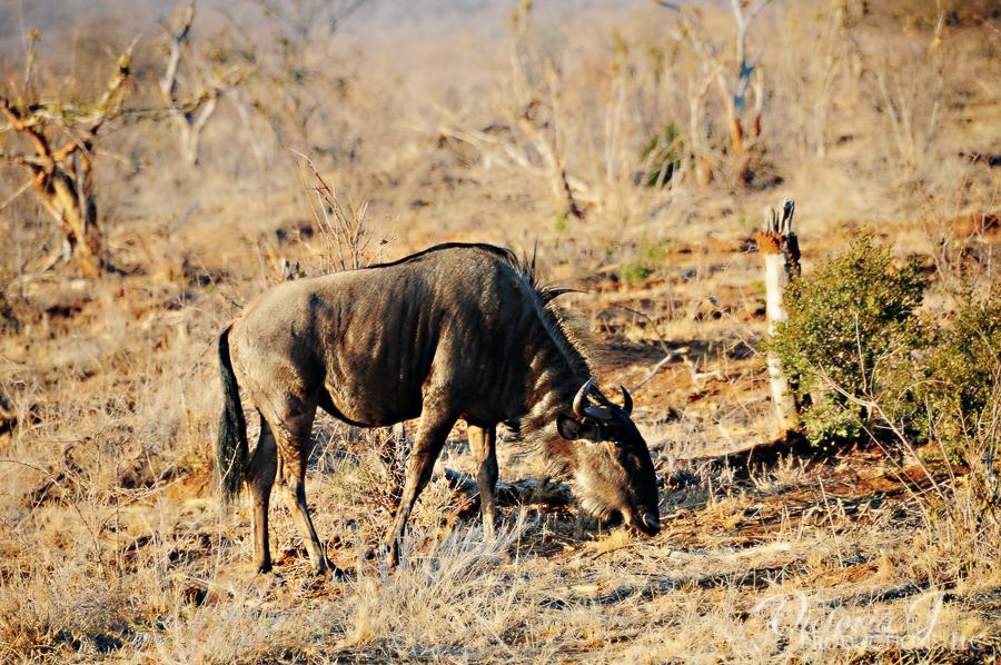 Africa-Madikwe-small-131