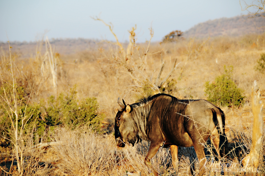 Africa-Madikwe-small-132