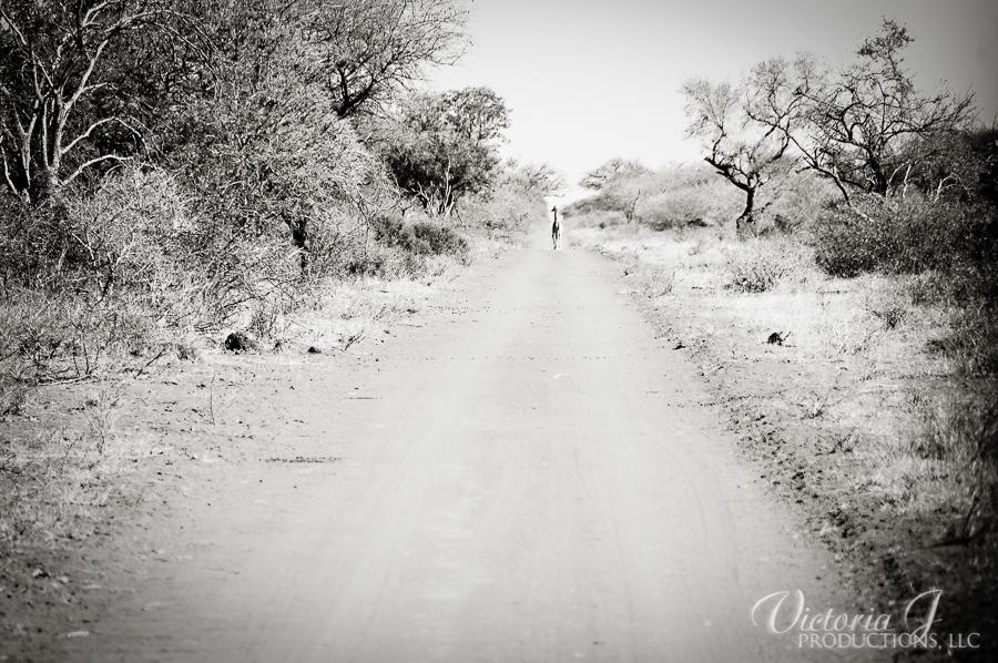 Africa-Madikwe-small-144