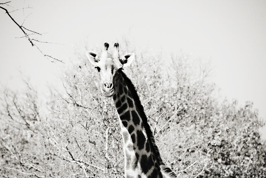 Africa-Madikwe-small-147