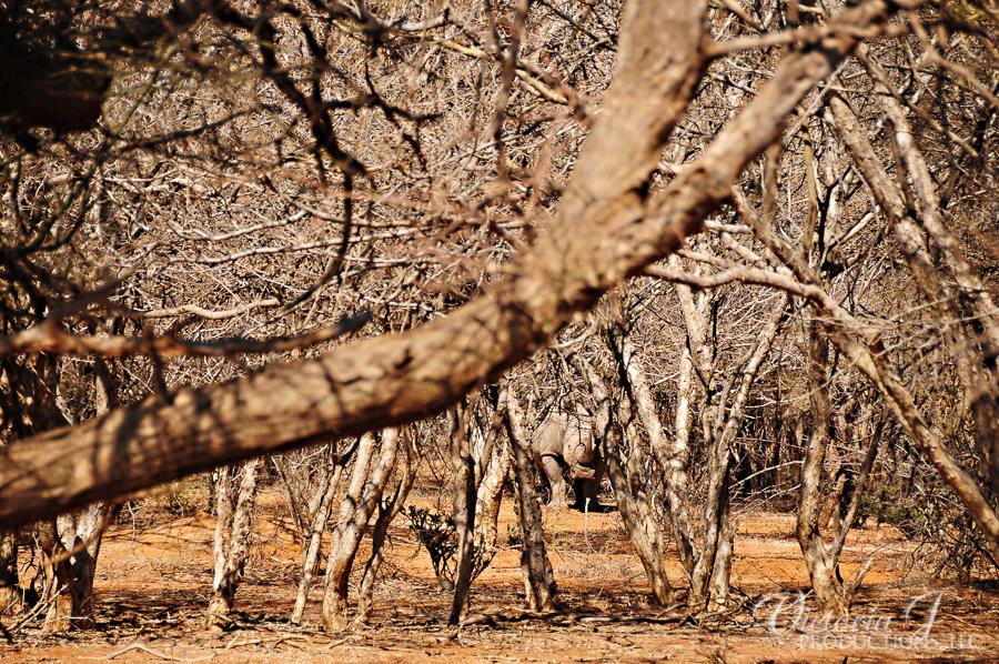Africa-Madikwe-small-149