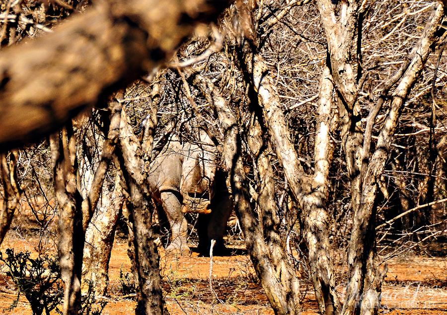 Africa-Madikwe-small-150