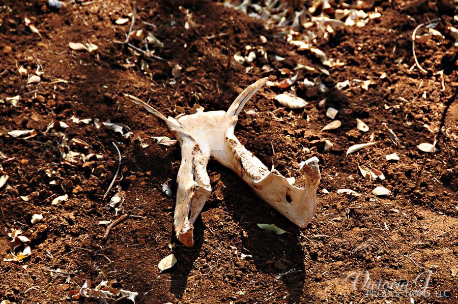 Africa-Madikwe-small-152