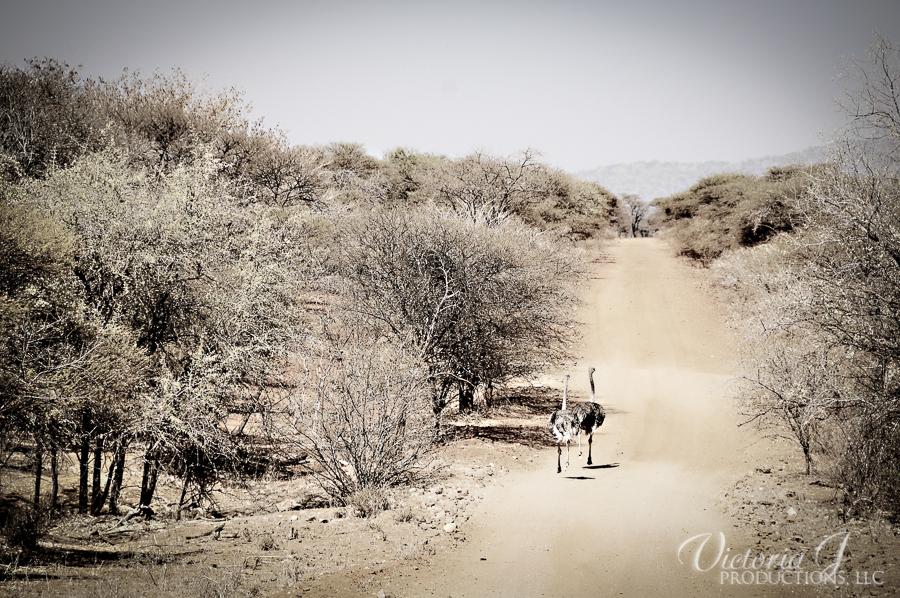 Africa-Madikwe-small-156