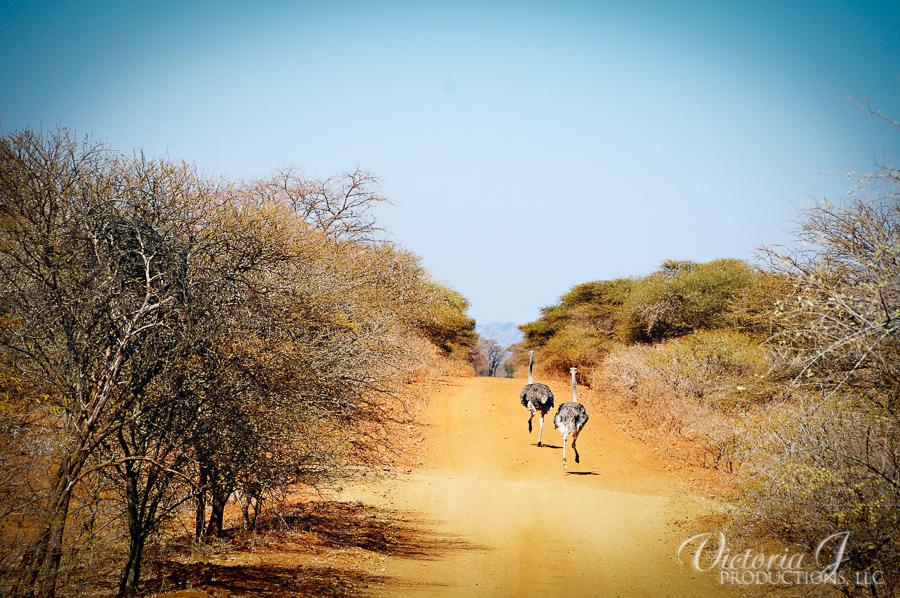 Africa-Madikwe-small-157