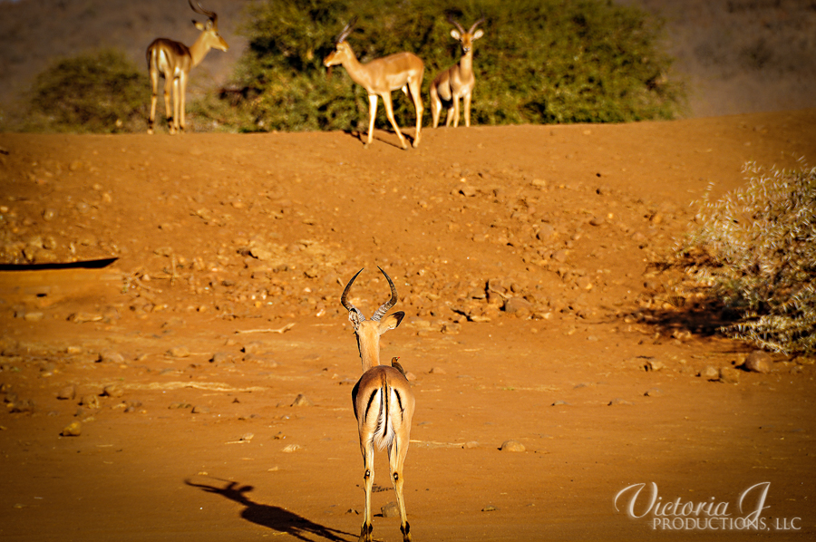 Africa-Madikwe-small-159