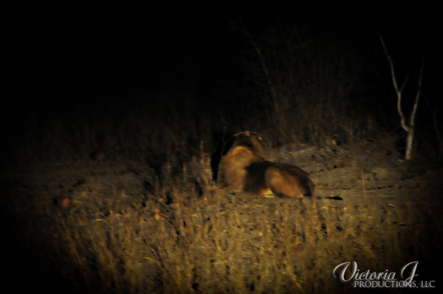 Africa-Madikwe-small-184