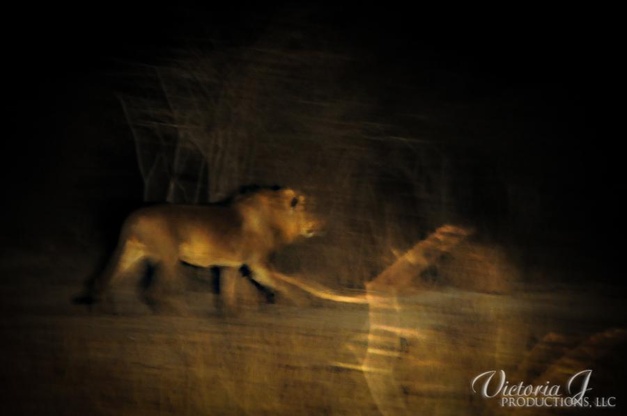 Africa-Madikwe-small-185