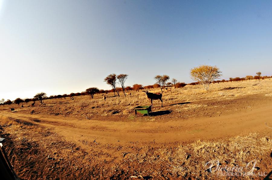 Africa-Madikwe-small-194