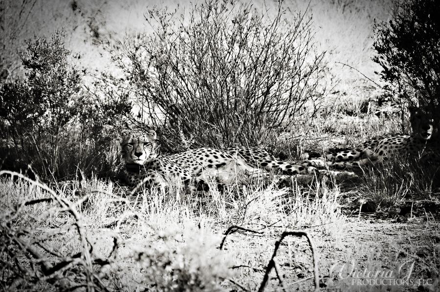 Africa-Madikwe-small-201