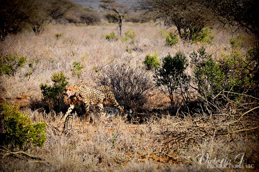 Africa-Madikwe-small-204