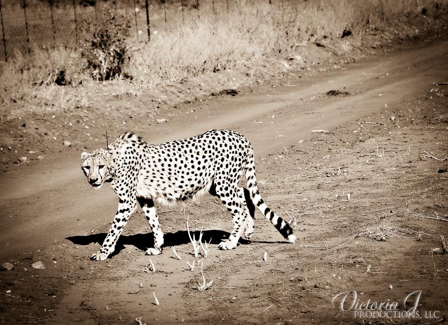 Africa-Madikwe-small-206