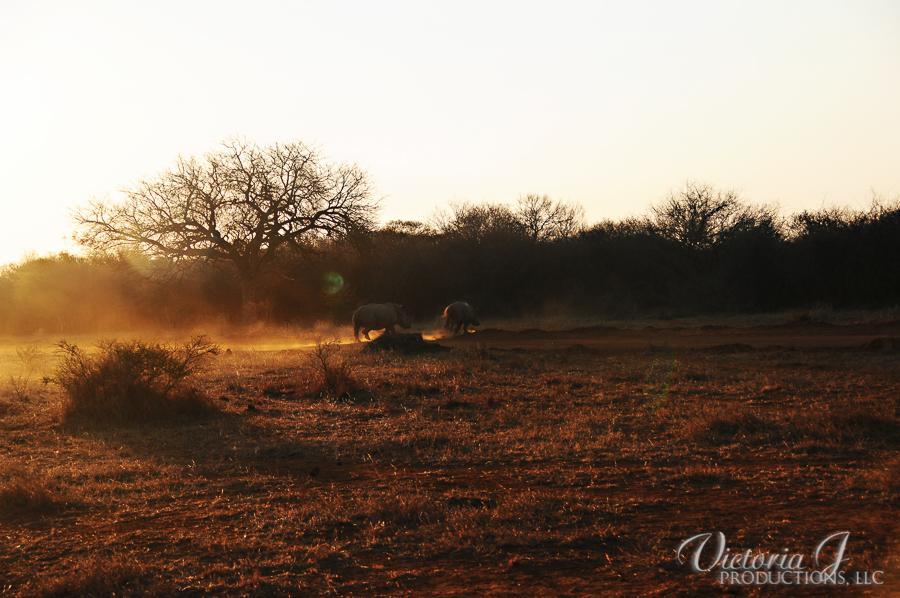 Africa-Madikwe-small-246