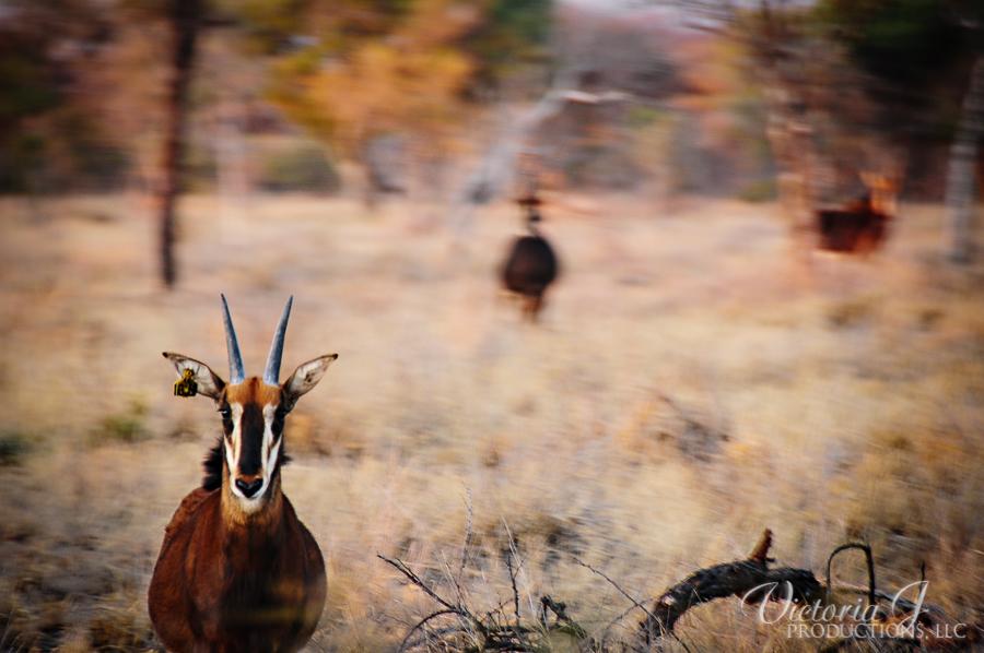 Africa-Madikwe-small-247